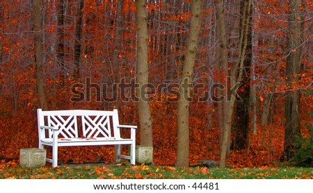 Bright white bench set against a fall forest
