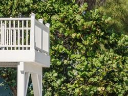 Bright white wooden lookout extending from beach house (off camera) by tall leafy hedge on a sunny day along the Gulf Coast of west central Florida, USA, for motifs of visibility, seclusion, escapism