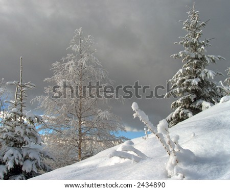 bright winter mountainside with frosty snow-covered trees and first signs of future snowstorm