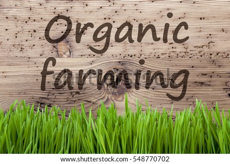 Bright Wooden Background, Gras, Text Organic Farming #548770702