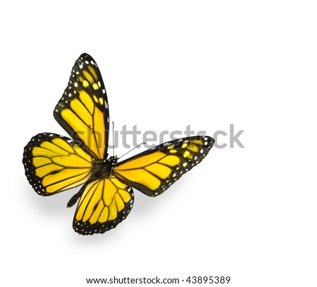 Bright Yellow Butterfly Isolated on White