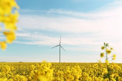 Bright yellow field of rapeseed flowers and a wind generator on a sunny day. Energy sources.