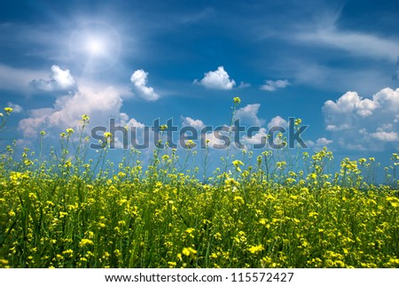 bright yellow flower field with sunny sky