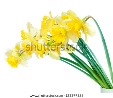 bright yellow flowers isolated on white