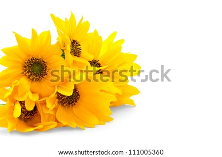 Bright yellow flowers isolated on white background