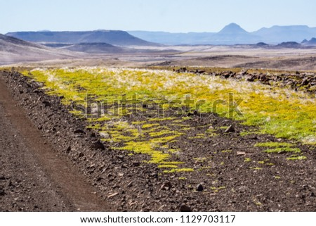 Bright, yellow ground plants dominate the roadside landscape with a blue sky and distant hills in Damaraland, Namibia, Africa. #1129703117