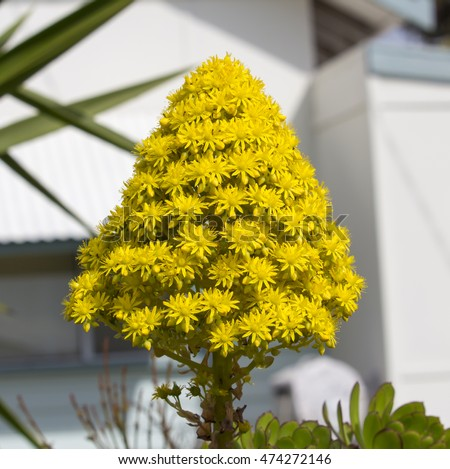 Free Photos Bright Yellow Large Conical Vivid Flower Head And Leaves