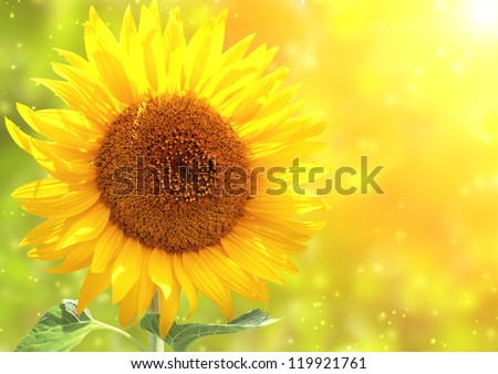 Bright yellow sunflower and sun