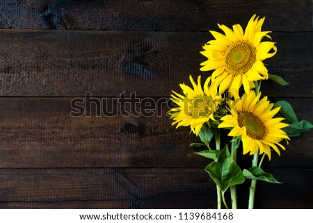 Bright yellow sunflowers on natural rustic texture wooden board. Mockup banner with flowers of the sunflower on dark background with copy space. Autumn harvest, abundance, natural products concept