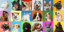 Bright. Young dogs, pets collage. Cute doggies or pets are looking happy isolated on multicolored background. Studio photoshots. Creative collage of different breeds of dogs. Flyer for your ad.