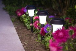 Brightly Burning Lamps In Row With Flowers Of Aster On Flowerbed In Summertime At Evening Close Up.
