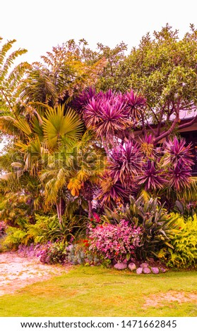Brightly colored bushes full of fresh flower petals grow easily in California's temperatures. Purple and bright deep pink petals