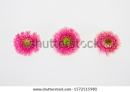 Brightly colored flowers against white background