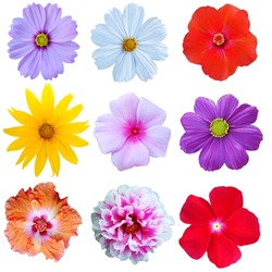Brightly colored flowers collection White background,isolated
