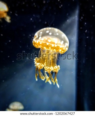 brightly colored jellyfish #1202067427