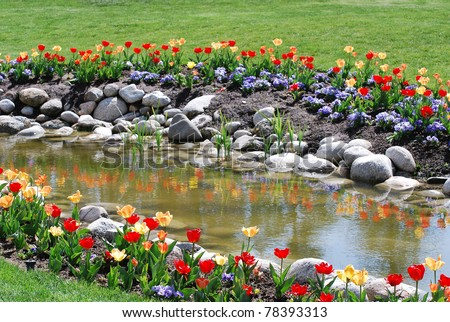 Brightly colored red and yellow tulips with rocks bordering a pond and green lawn. Tulips reflecting in water.