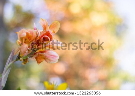 Brightly colored yellow and pink flowers with large circular bokeh balls blurred into the bright and colorful background. Budding flowers mid season show life and vibrance with beautiful green stems #1321263056