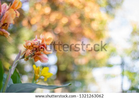 Brightly colored yellow and pink flowers with large circular bokeh balls blurred into the bright and colorful background. Budding flowers mid season show life and vibrance with beautiful green stems #1321263062