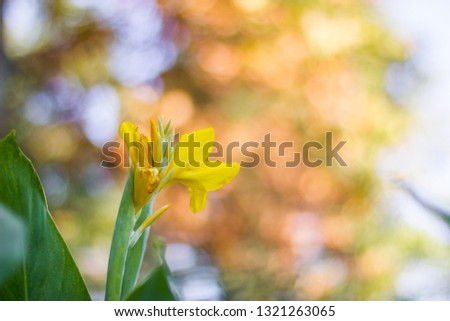 Brightly colored yellow and pink flowers with large circular bokeh balls blurred into the bright and colorful background. Budding flowers mid season show life and vibrance with beautiful green stems #1321263065