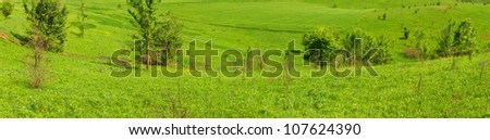 Brightly green meadow landscape