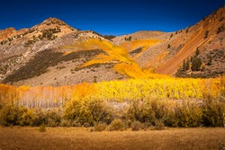Brilliant autumn colors on a mountainside in Owens Valley, California.
