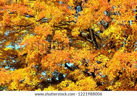 Brilliant Bright Fall Colors on Trees Foliage #1221988006