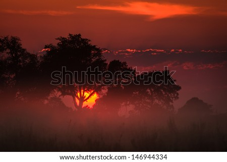 Brilliant orange sun appears at sunrise to illuminate the clouds and grasslands in the Okavango Delta, Botswana, Africa