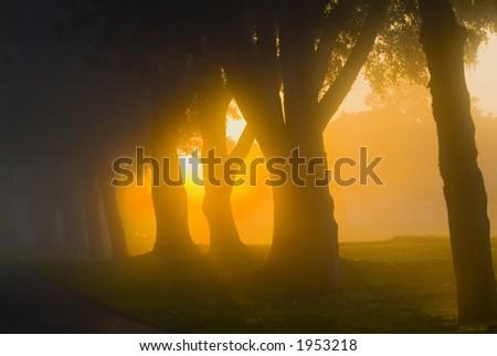 Brilliant sun light with fog 47 - stock photo