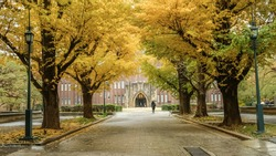 Brilliant yellow ginkgo tunnel at University of Tokyo(Todai) in autumn.