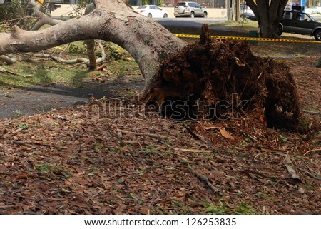 BRISBANE, AUSTRALIA - JANUARY 28 : Tree fallen across road during  tropical cyclone Oswald on January 28, 2013 in Brisbane, Australia