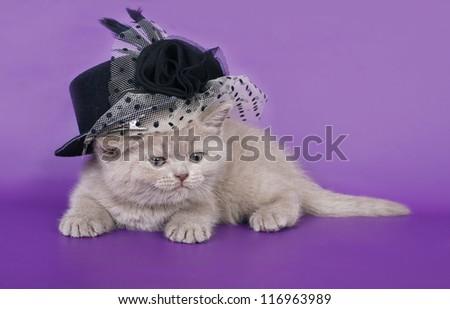British cat in a hat.