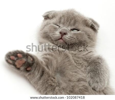 stray cat overrun