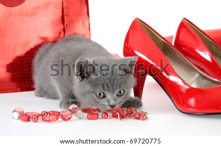 British gray kitten with red shoes and a beads.