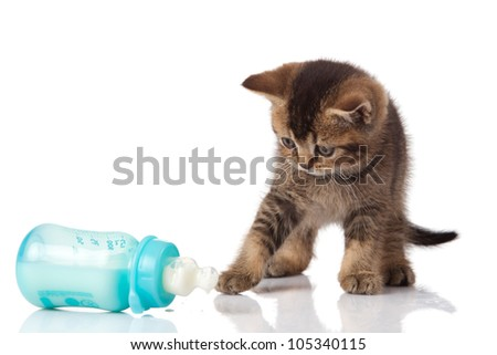 British Kitten and baby milk bottle on white background.