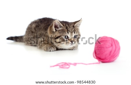 British kitten playing red clew or ball isolated