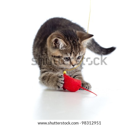 British kitten playing red mouse isolated - stock photo