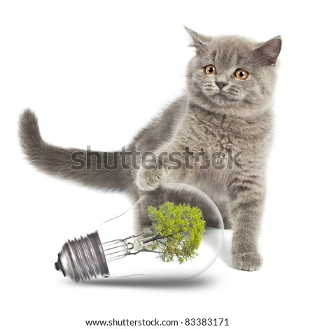 British Kitten with environmentally friendly light bulb. Isolated on white background