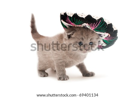 British kitten with sombrero on isolated on white