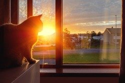 British short hair cat watching sunrise sitting by a window in a house. Warm sun light. Sun rising over houses in a street. Magic hour, calm morning mood. House pet life and adventure theme
