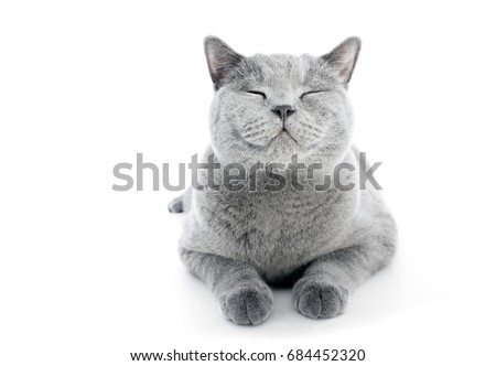 Stock Photo British Shorthair cat isolated on white. Smiling expression, happy