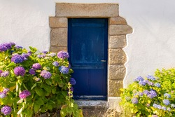 Brittany, Ile aux Moines island in the Morbihan gulf, wooden blue door in the village, with hydrangeas