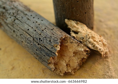 Photo of  Brittle piece of wood decayed by woodworms