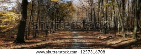 Broad leaf trees forest/woodland with gravel road at autumn afternoon daylight.,forest floor,foliage, panoramic photo. Bright colours, Chriby,Czech Republic,Europe.
