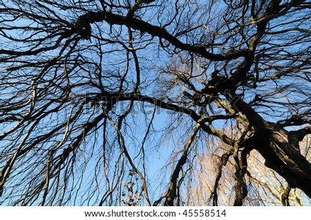 Broad-leaved trees in the park of Laxenburg near Vienna in Lower Austria during a sunny winter day