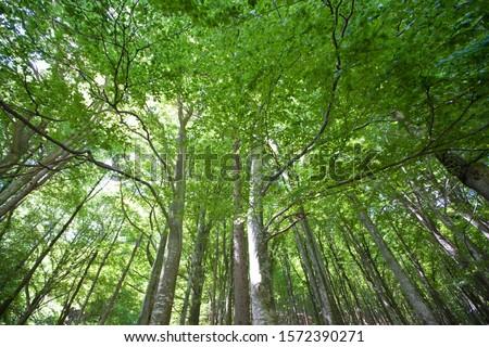 Broadleaf Forest near Lavertezzo, Valle Verzasca, Ticino, Switzerland