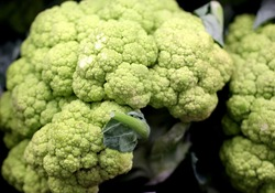Broccoflower, Green Cauliflower, Brassica oleracea, a hybrid between cauliflower and broccoli that has curds like former but colour like latter, sweeter than cauliflower with zing of broccoli.