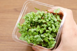 Broccoli sprouts. A nutrient-rich food.