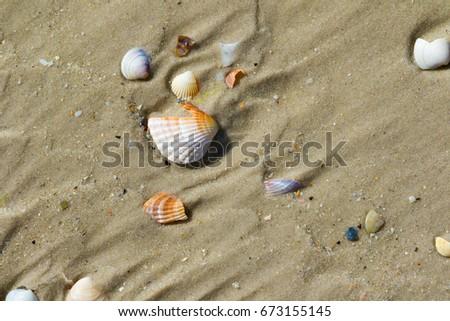 Brocken seashells on wet sand beach at hot sun summer day. View from above. #673155145