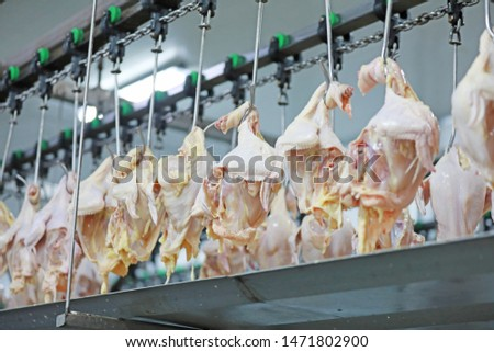 Broiler hangs on the production line