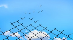 Broken Chainlink Fence with Bright Blue Sky and Birds Flying, Fight for Better Life concept, Think out of the box and Free your mind concept